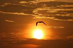gaviota-que-vuela-hacia-el-sol_2358567